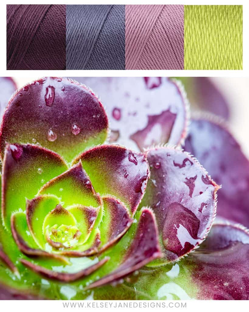 Who doesn't love succulents!?! Let nature inspire the color scheme of your next knit or crochet project with Caron Simply Soft yarns (Plum Perfect, Lavender Blue, Blackberry and Chartreuse).
